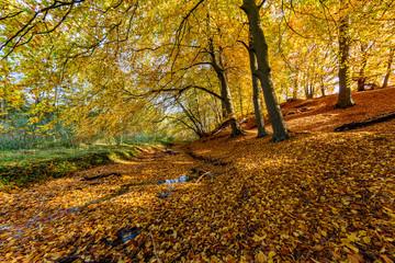 Herbstwald im Christinental