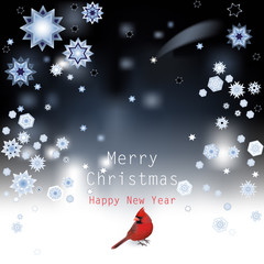 Christmas Background with Red cardinal.