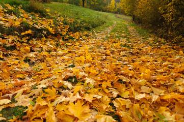 Złote liście na trawie