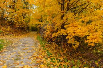 Złota jesieńw parku