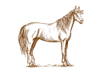 Horse standing with head turned