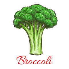 Broccoli leafy cabbage vegetable