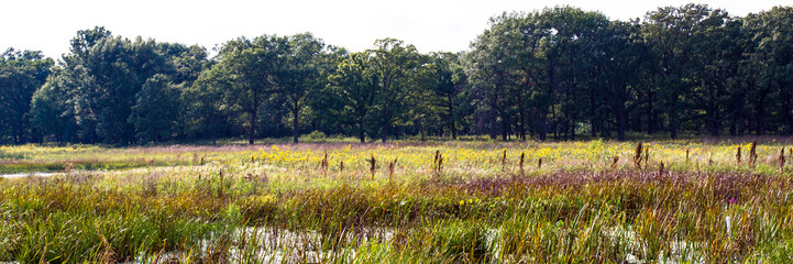 Wetland at Middlefork Savanna Forest Preserve in Lake County, Illinois