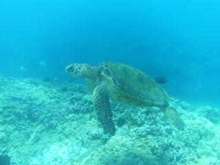 Sea Turtile in the Deep Blue Sea