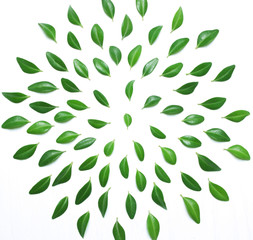 The composition, pattern of green leaves on a white background