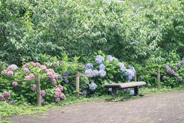 Scenery with the bench / Promenade of the park