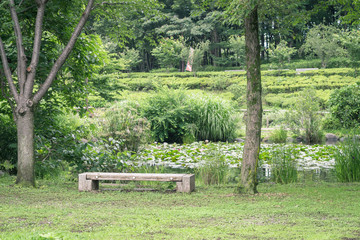 Scenery with the bench / look at a pond