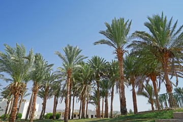 Palm grove in a luxury hotel