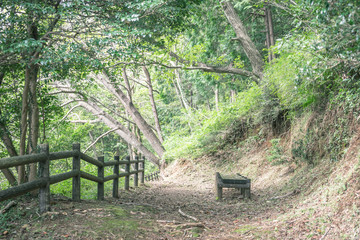 Scenery with the bench / Promenade of the natural park
