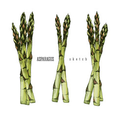 3 Bundle of asparagus of 3 and 2 stalks of asparagus vector isolated set color illustration sketch hand drawn on white background.