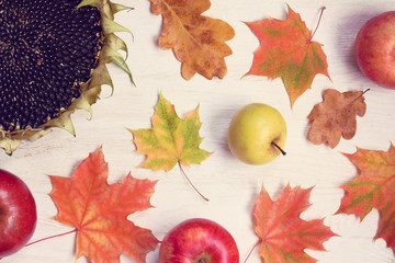 autumn good for harvest/ flat layout of maple leaves, apple and sunflower