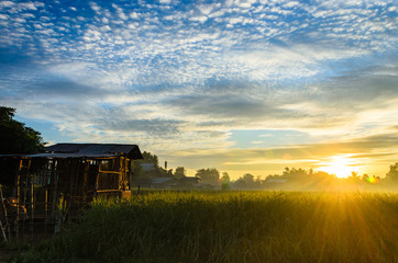Lifestyle in the countryside, in the view the sunrise