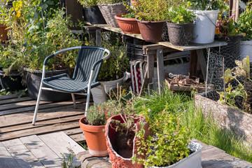 kleiner Dachgarten mit Kräuterpflanzen
