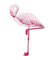 vector sketch of a flamingo. hand drawn illustration