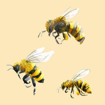 Watercolor hand drawn bees