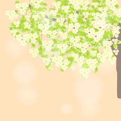 Spring leaves light background