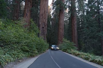 Sequoia National Park Road.
