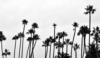 Santa Monica Palms