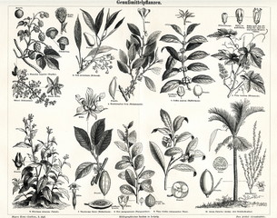 Plants, producing luxury or stimulant goods (from Meyers Lexikon, 1895, 7/338/339)