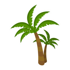 Palm Tree Isolated on White Background. Arecaceae