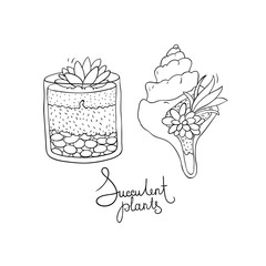Vector glass terrariums and the seashell with succulents set.