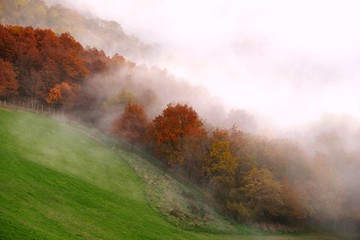 Tilt Image Of Autumn Trees On Field During Foggy Weather