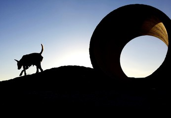 Side View Of A Silhouette Dog Against Clear Sky