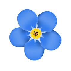Forget me not flower blossom. Blue flower. Vector illustration
