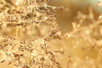 blur background on a summer meadow
