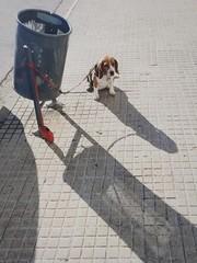 Dog Tied To Garbage Bin On Sidewalk