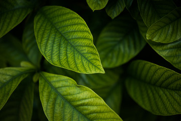 Close-Up Of Green Leaves Growing Outdoors