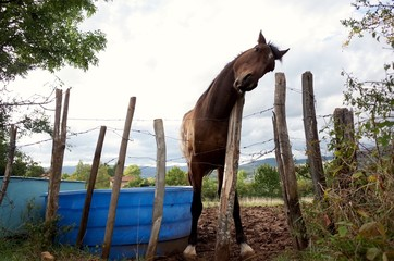 Low Angle View Of Horse Standing By Fence At Field