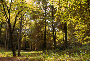 English woodland in the early morning sun