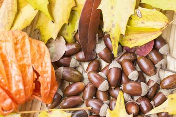 どんぐりと落ち葉 秋のイメージ