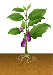 Eggplants plant on the tree illustration