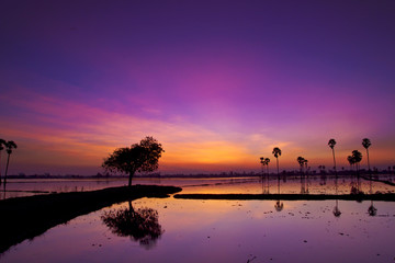 Silhouette twilight sunset sky reflect on the water with palm tree landscape