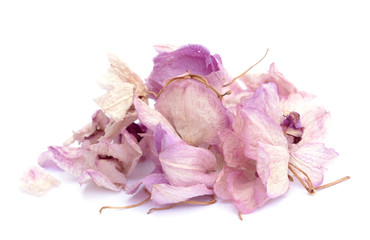 dried orchid