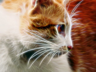 Brown cat  / neon light  photo effect