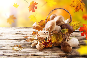 Mushroom Boletus on Wooden Background