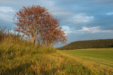 Landschaft Schwarzwald