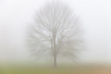 Autumn Fall Tree in Mist or Fog