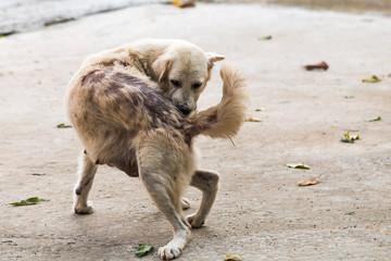 Dog bites back because leprosy