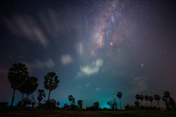 Palm trees under the milky way