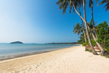 Wall Mural - Beautiful Tropical Beach and Coconut palm tree at Koh Mak Island ,Thailand