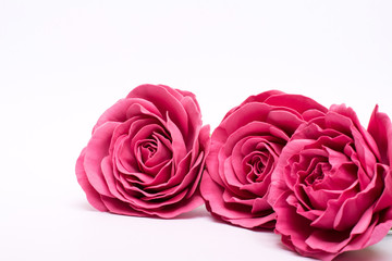red roses. isolate on white background