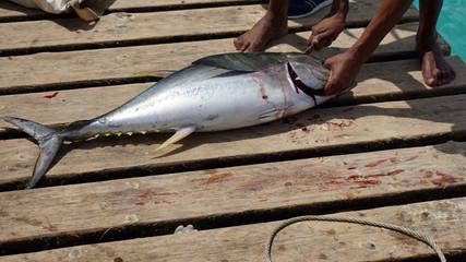 yellow fins tuna