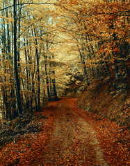 Mountain road in the autumn