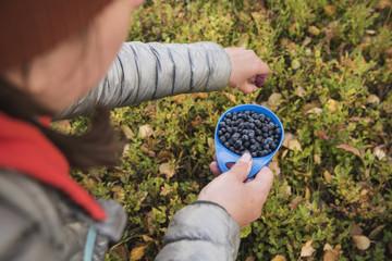 Hiker picking wild blueberries outside Tärnasjös hut, Kungsleden trail, Lapland, Sweden