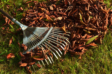 Autumn cleaning - raking fall leaves
