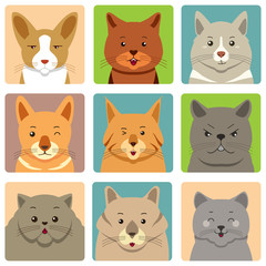 Different Cats Avatars and Expression